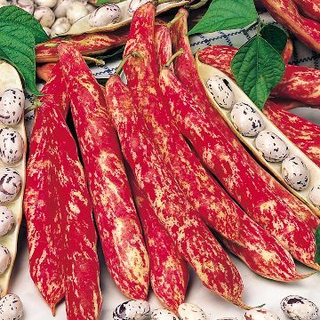 Intriguing Variety Red Skin White And Black Beans The 640 x 480