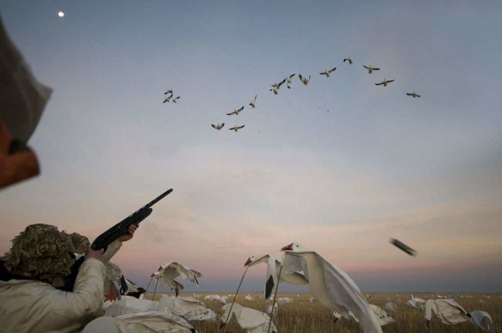 Huntin4Biggins: Snow Geese from sky to pot pie