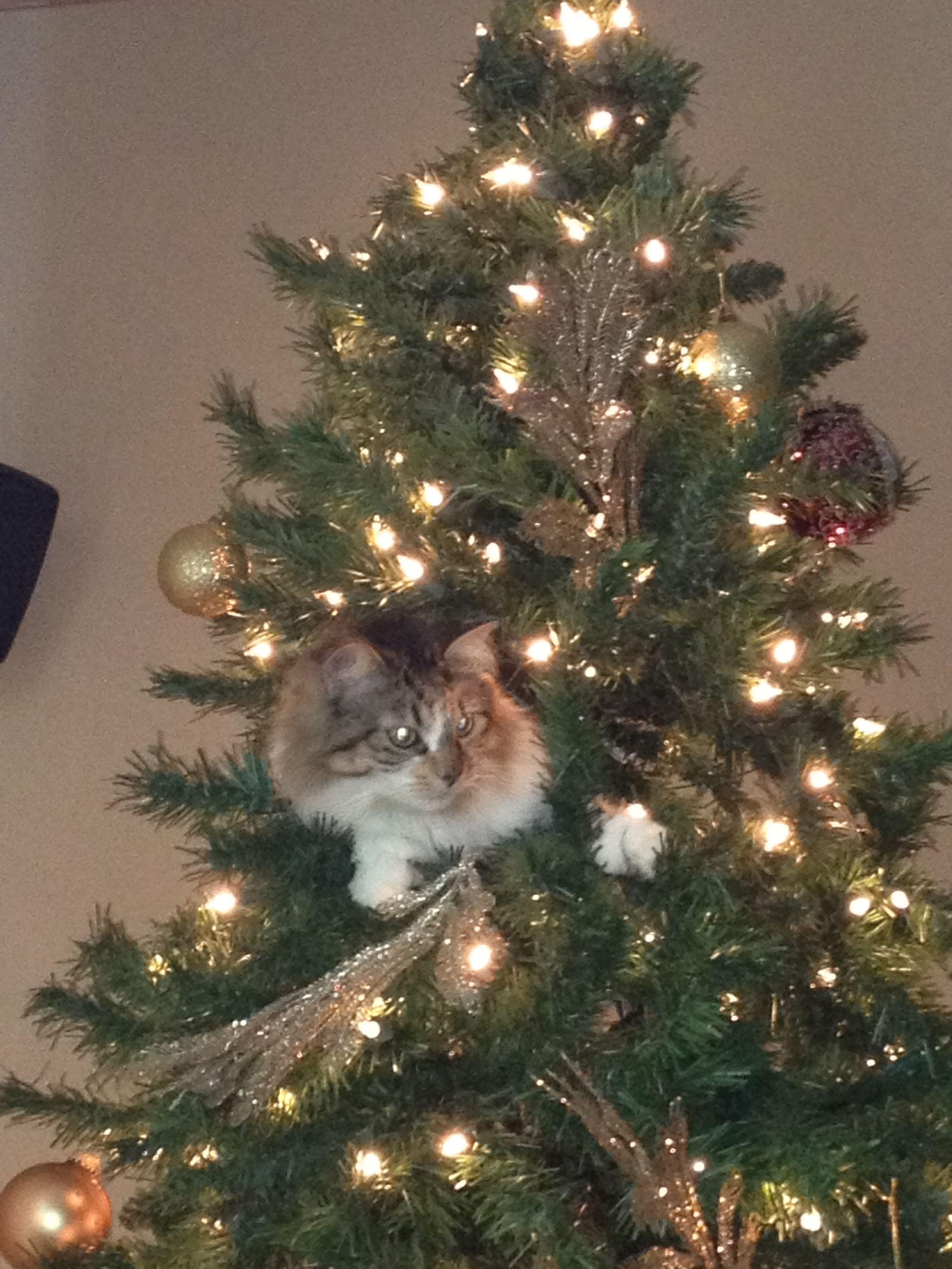 Our silly cat! Gets excited every year when we put this tree up!