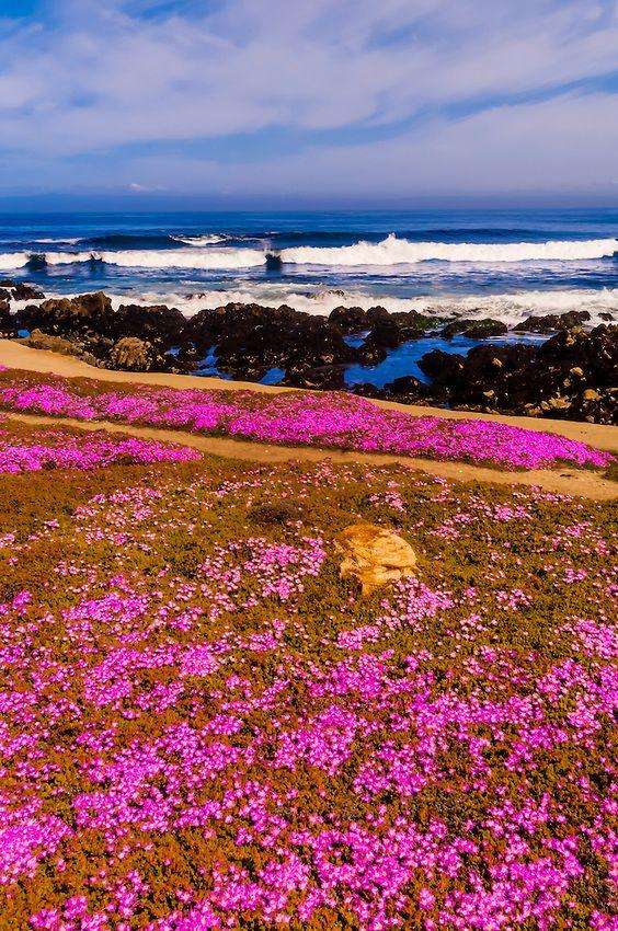 c6f79c7014e7893cfa413445b267de5d - Pacific Grove Marine Gardens State Marine