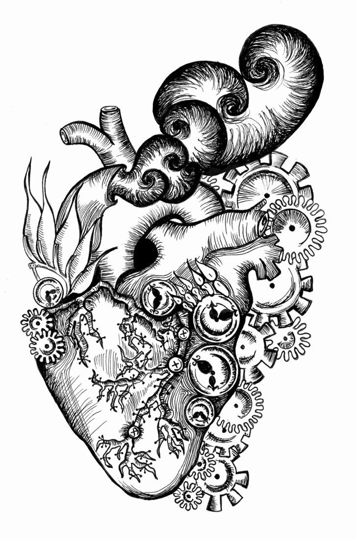 Anatomical Heart Coloring Page in 2020 Heart coloring