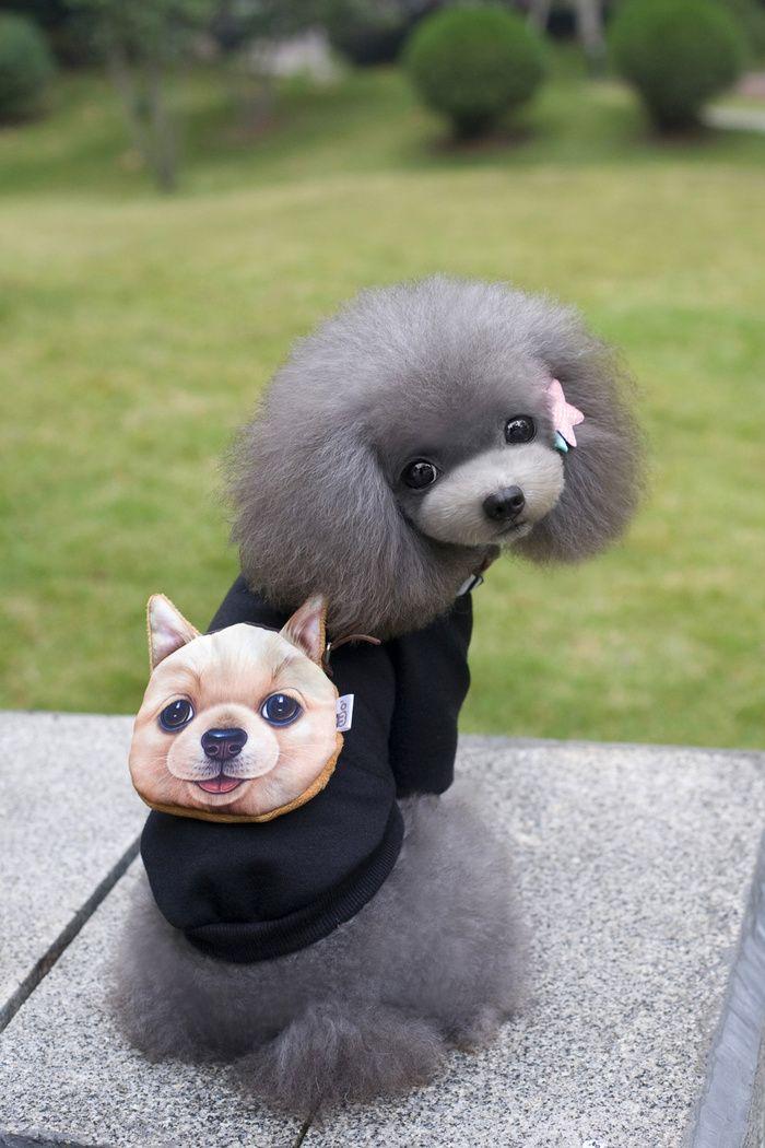 Dog Backpack Guard Clothes Jiangnan Dog King Pet Clothes