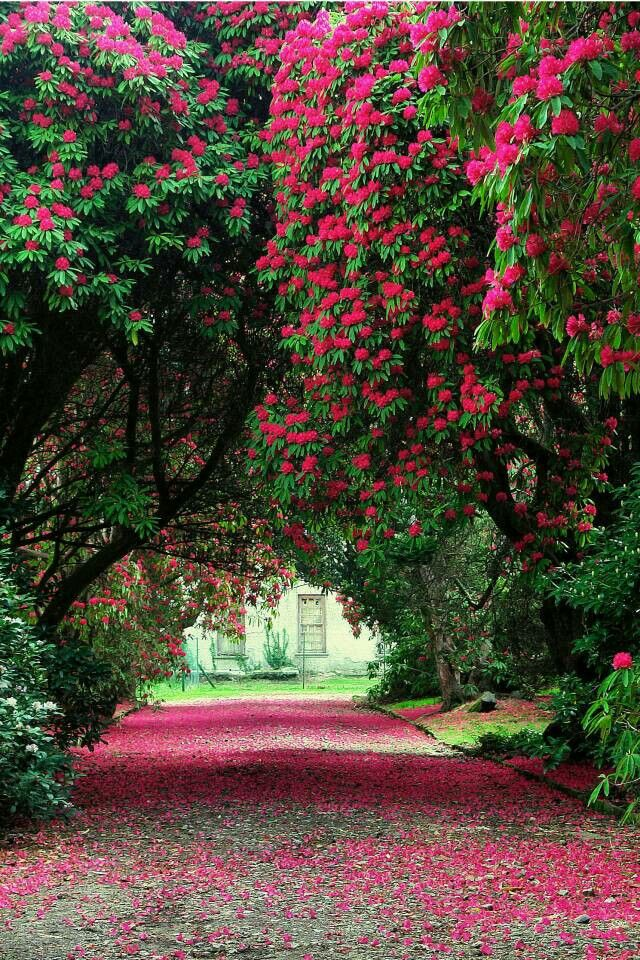 Pin By Cindy Nicholas On Lovely Paintings In 2020 Beautiful Gardens Beautiful Landscapes Gorgeous Gardens
