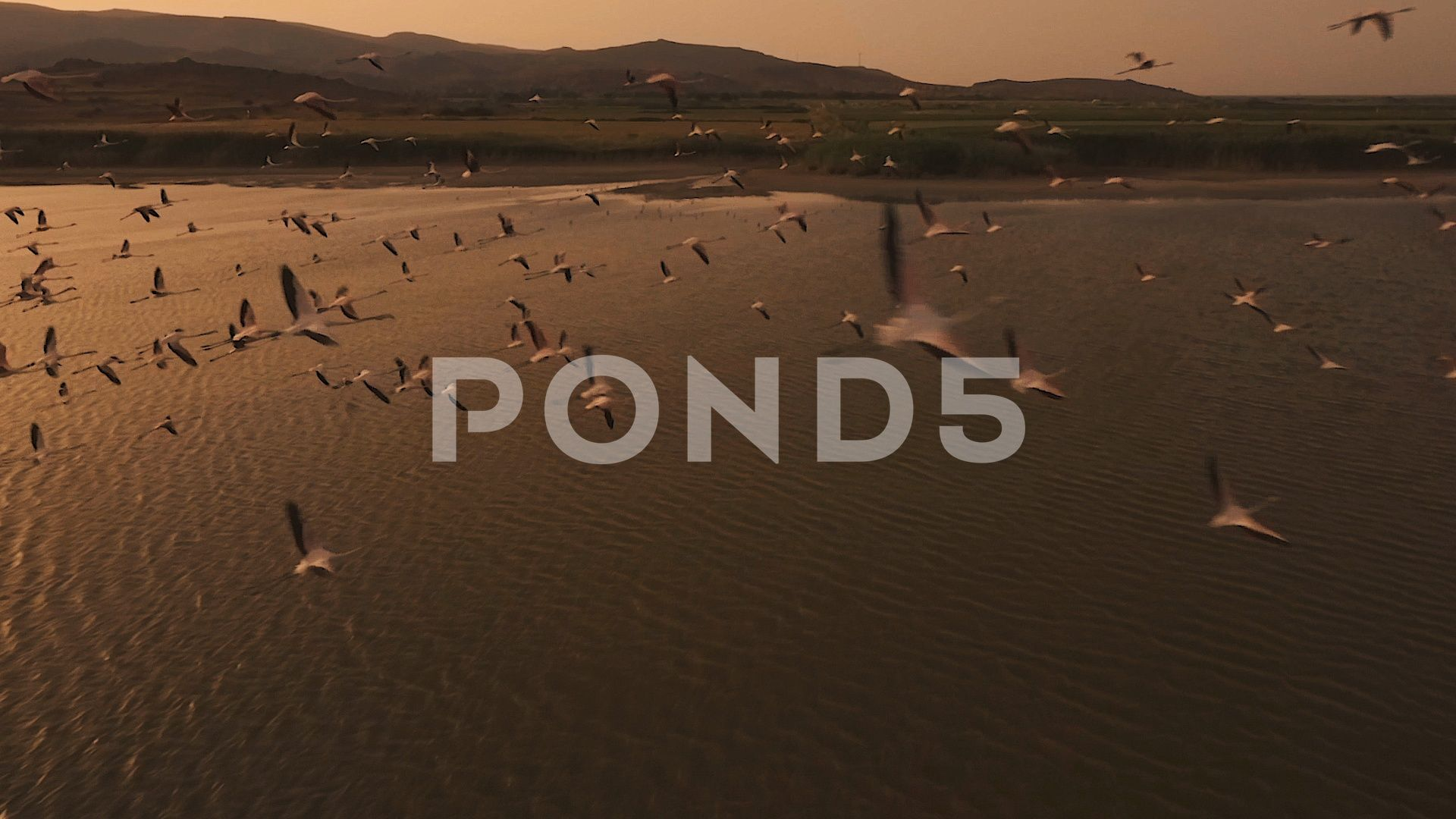 Flamingo Swarm  Drone Fly Through Stock Footage DroneSwarmFootageFlamingo