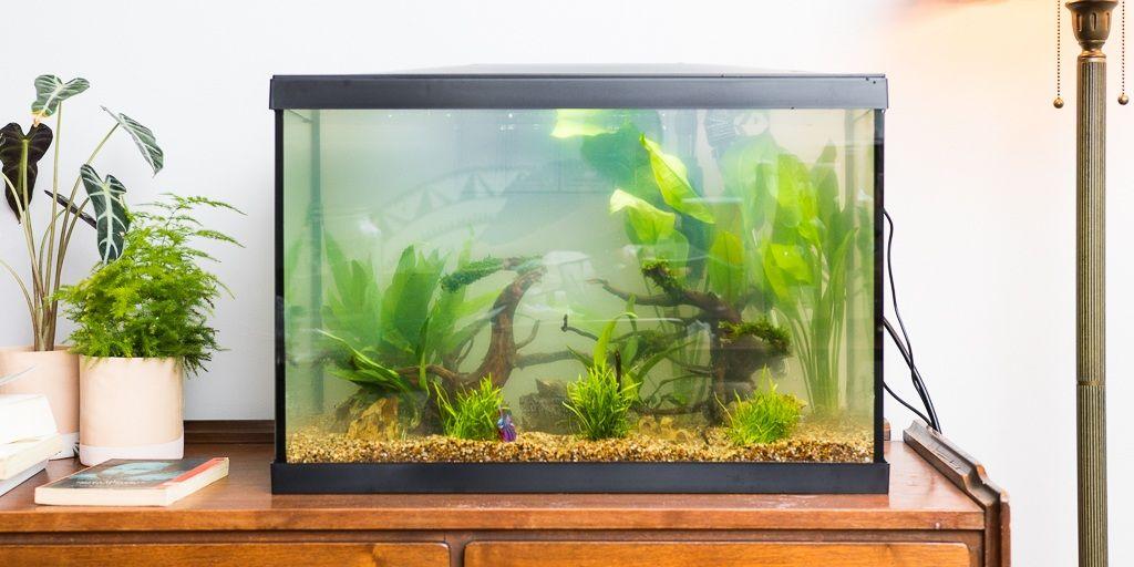 The Best Fish Tank Heater Light And Accessories Cool Fish Tanks Fish Tank Aquarium Kit