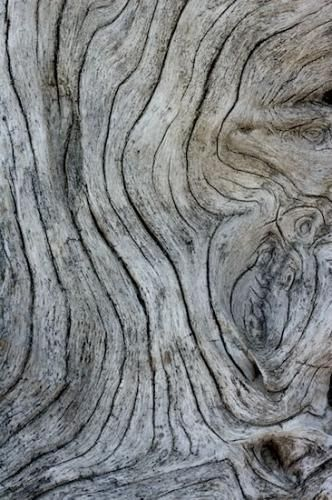Natural Wood With Grey Textures Organic Forms Woodgrain Line