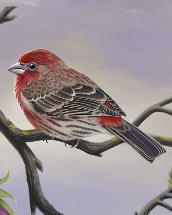 House Finch Whatbird Com Finch Finches Bird Cute Cats And Dogs