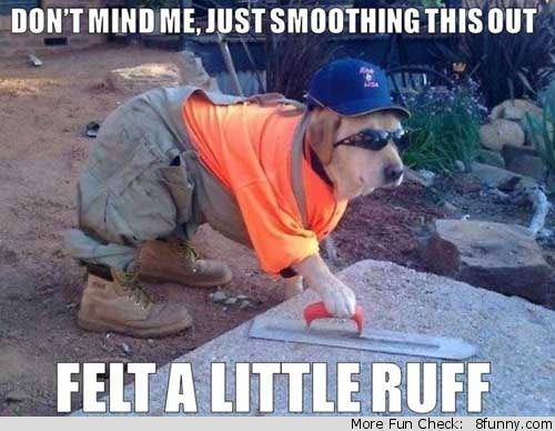 dog dressed as a builder
