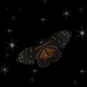 Butterfly Totem The Spiritual Meaning And Symbolism Of The