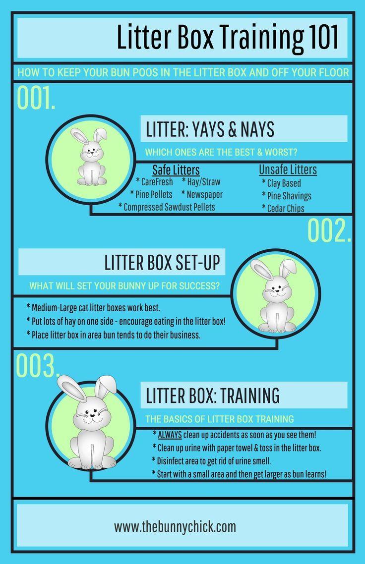 Bunny litter box training bunny litter box bunny mom