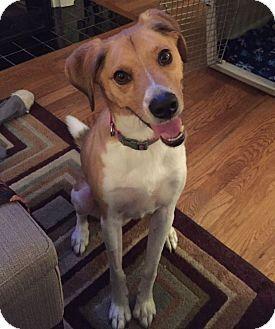 Nashville Tn Beagle Mix Meet Charlie A Dog For Adoption Http