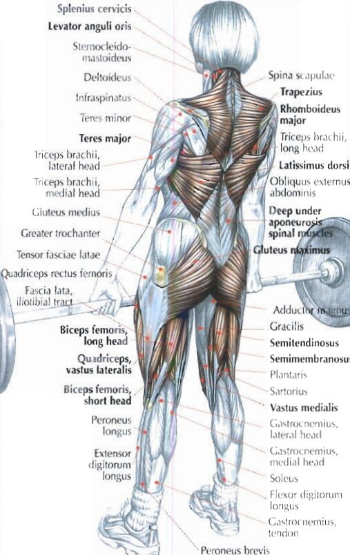strength training anatomy workout pdf