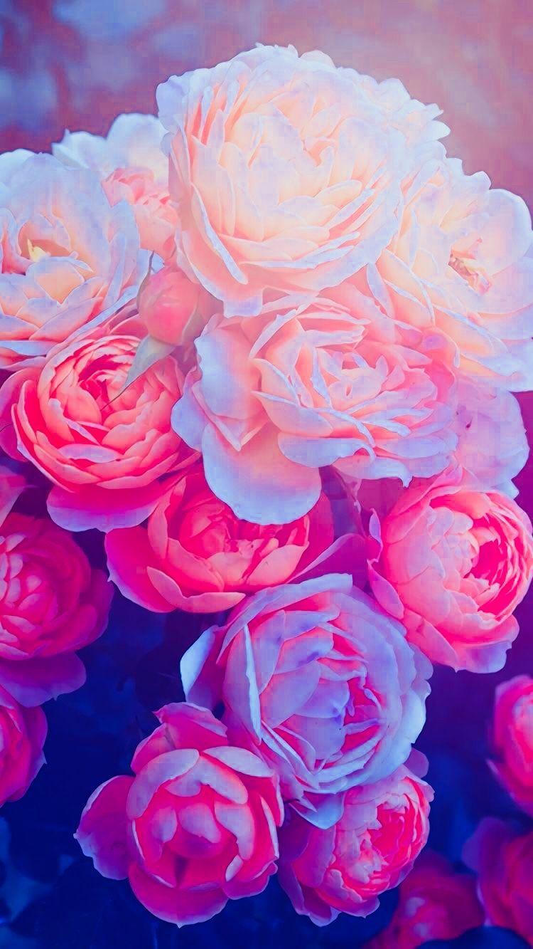 Pin By Dkh On Art Flower Wallpaper Flower Iphone Wallpaper Flower Aesthetic