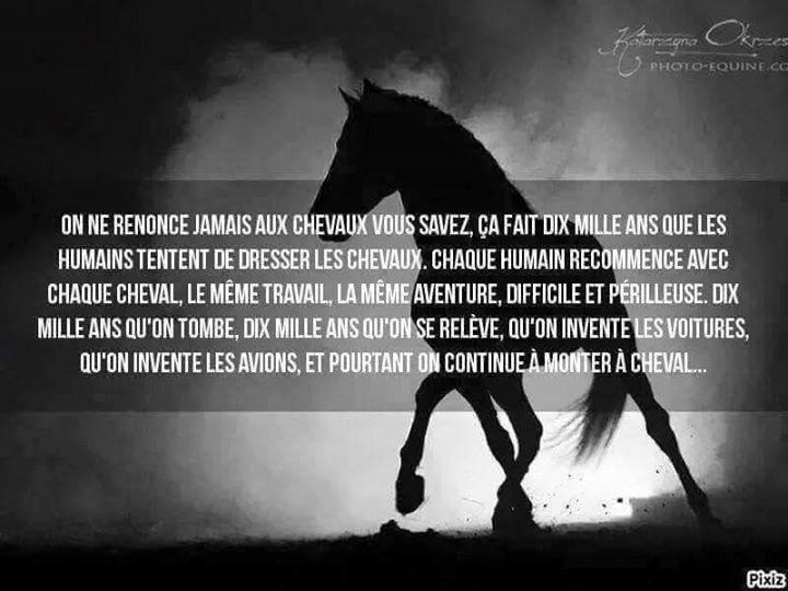 Citation Citation Cheval Citations Equitation Citations Equestres