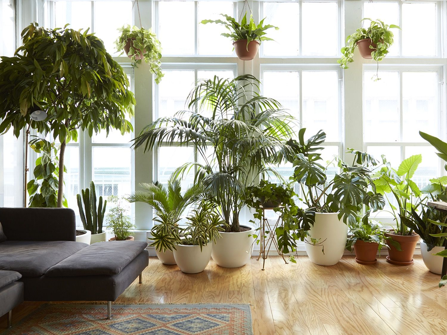 8 Houseplants that Can Survive Urban Apartments, Low Light and ...