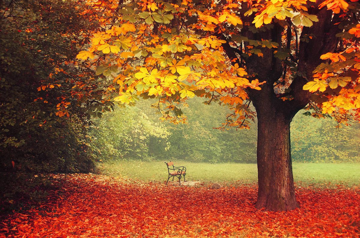 photography wall art print - framed fine art - autumn park - bench ...