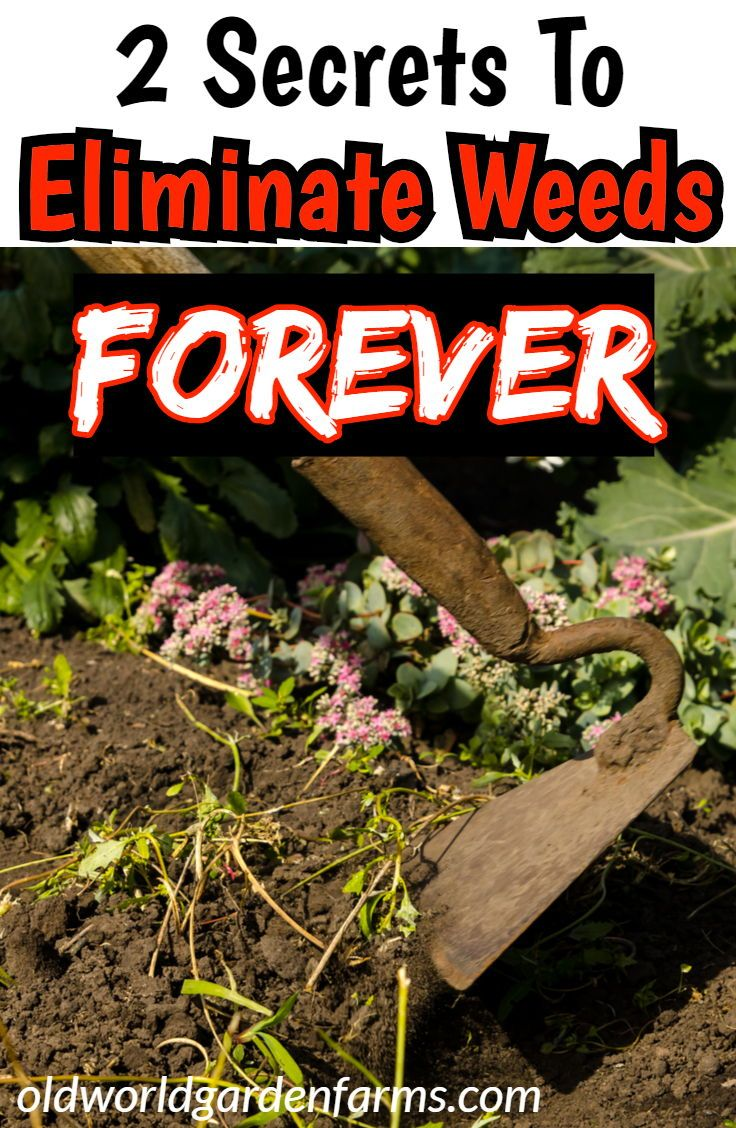 2 Big Secrets To Eliminate Weeds In Your Garden FOREVER!!! #garden #weeds #eliminate #chores #hoe #till #notill #tips #advice #soil #cover #oldworldgardenfarms