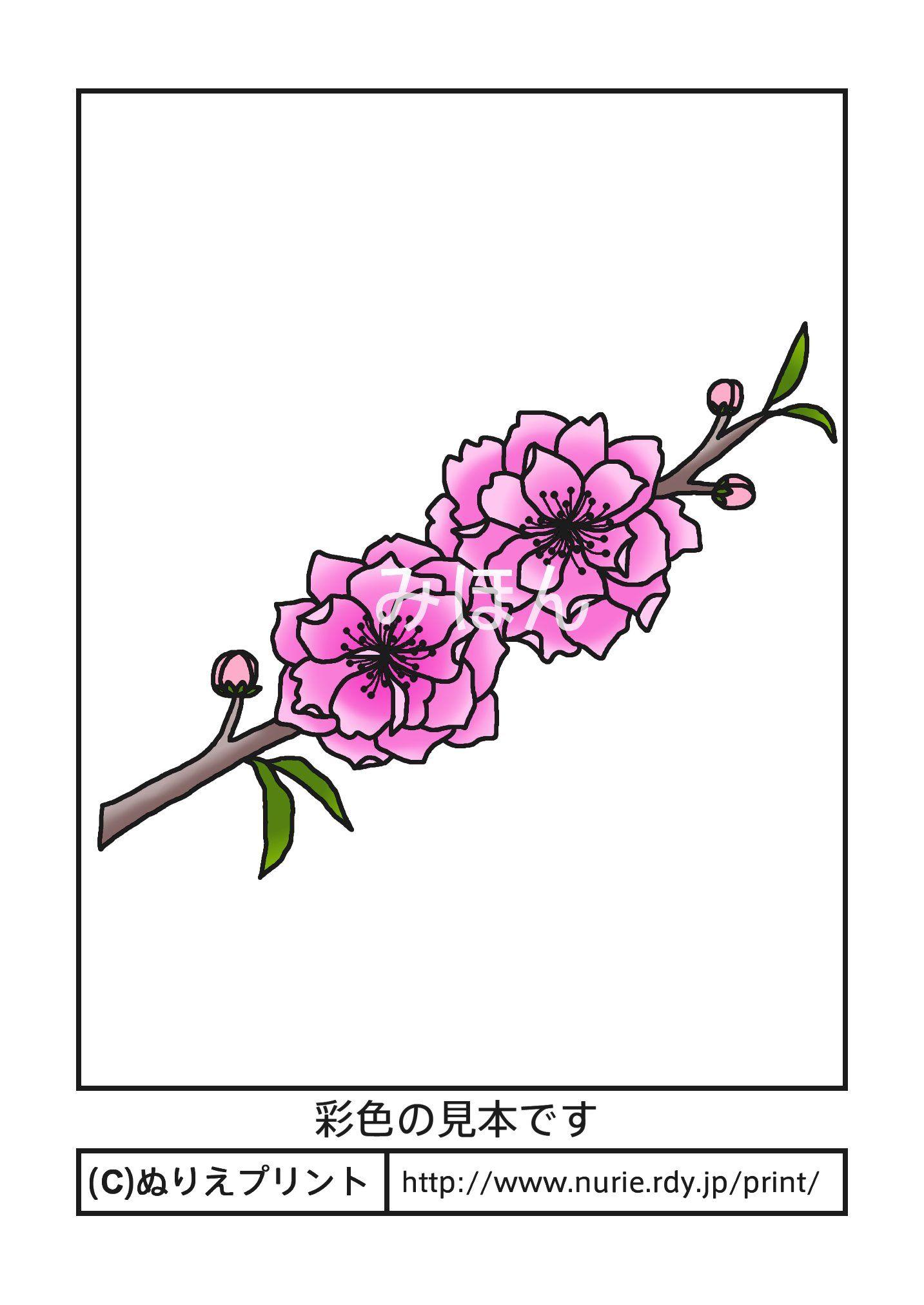 モモ彩色見本春の花無料塗り絵イラストぬりえプリント A