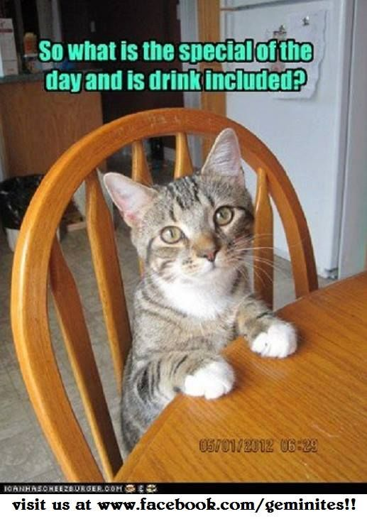 From The Geminites On Facebook Cat And Dog Memes Funny Cat Memes Kittens Funny