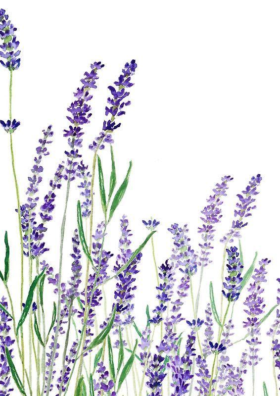 Lila Lavendel Horizontales Aquarell Spiralblock Colorandcolor