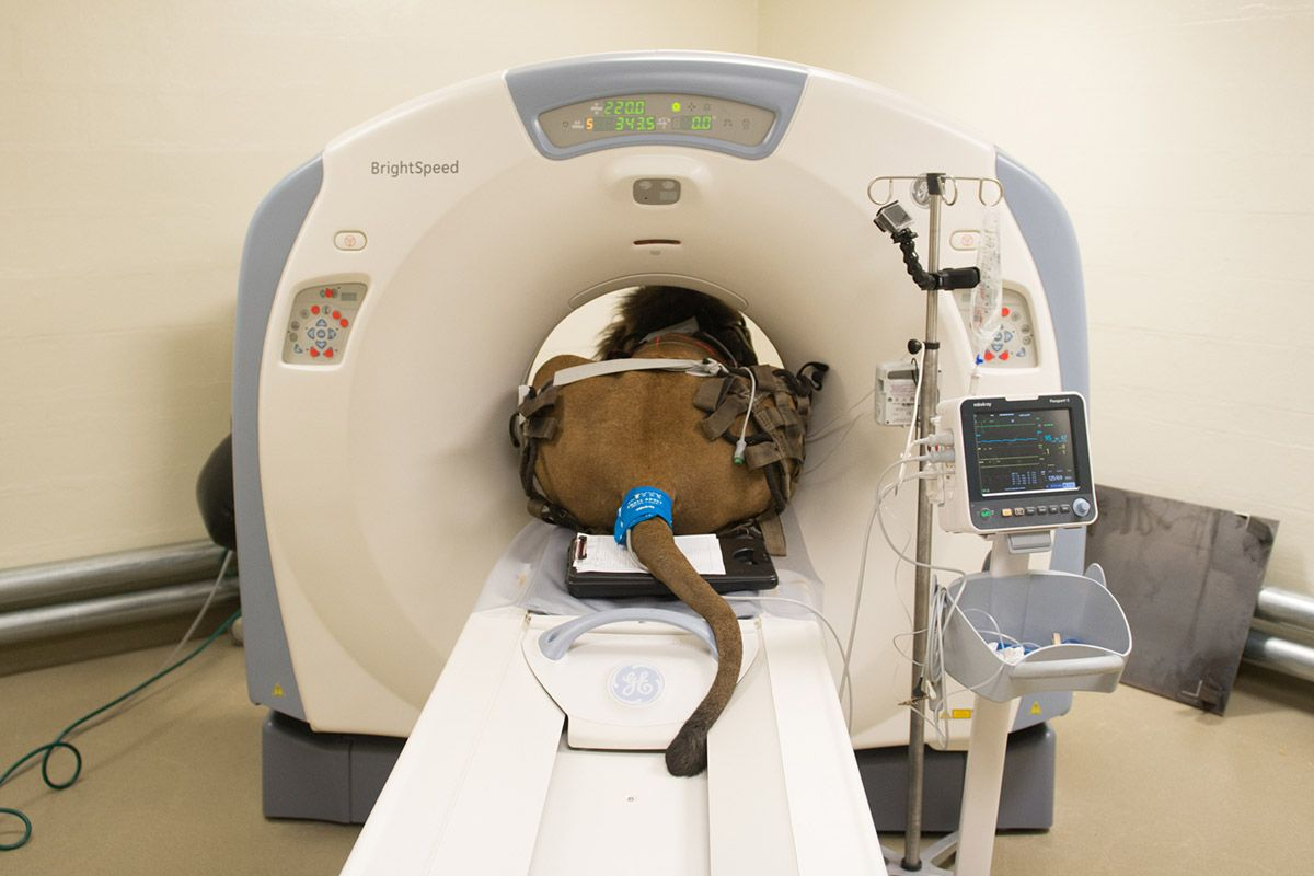 CT Scan Definition, Uses and Procedure in 2020 Cat