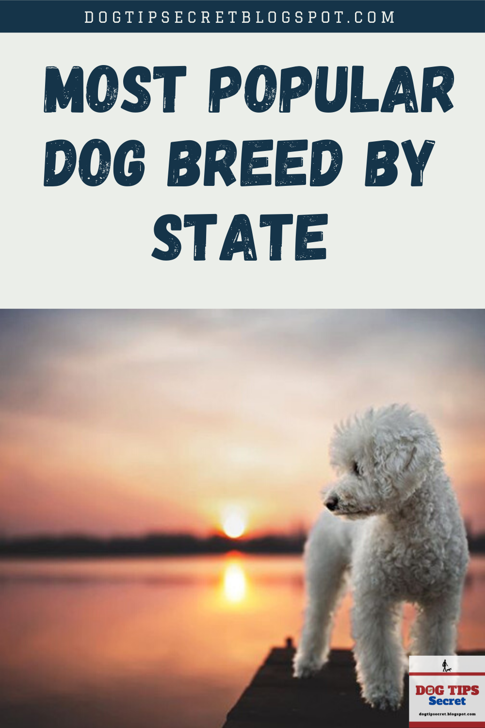 Most Popular Dog Breed by State DogTipSecret in 2020