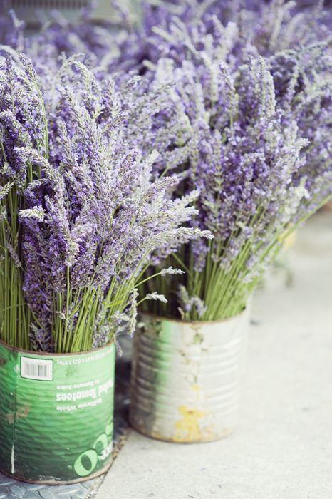 Untitled Lavender Flowers Lovely Lavender Lavender Cottage