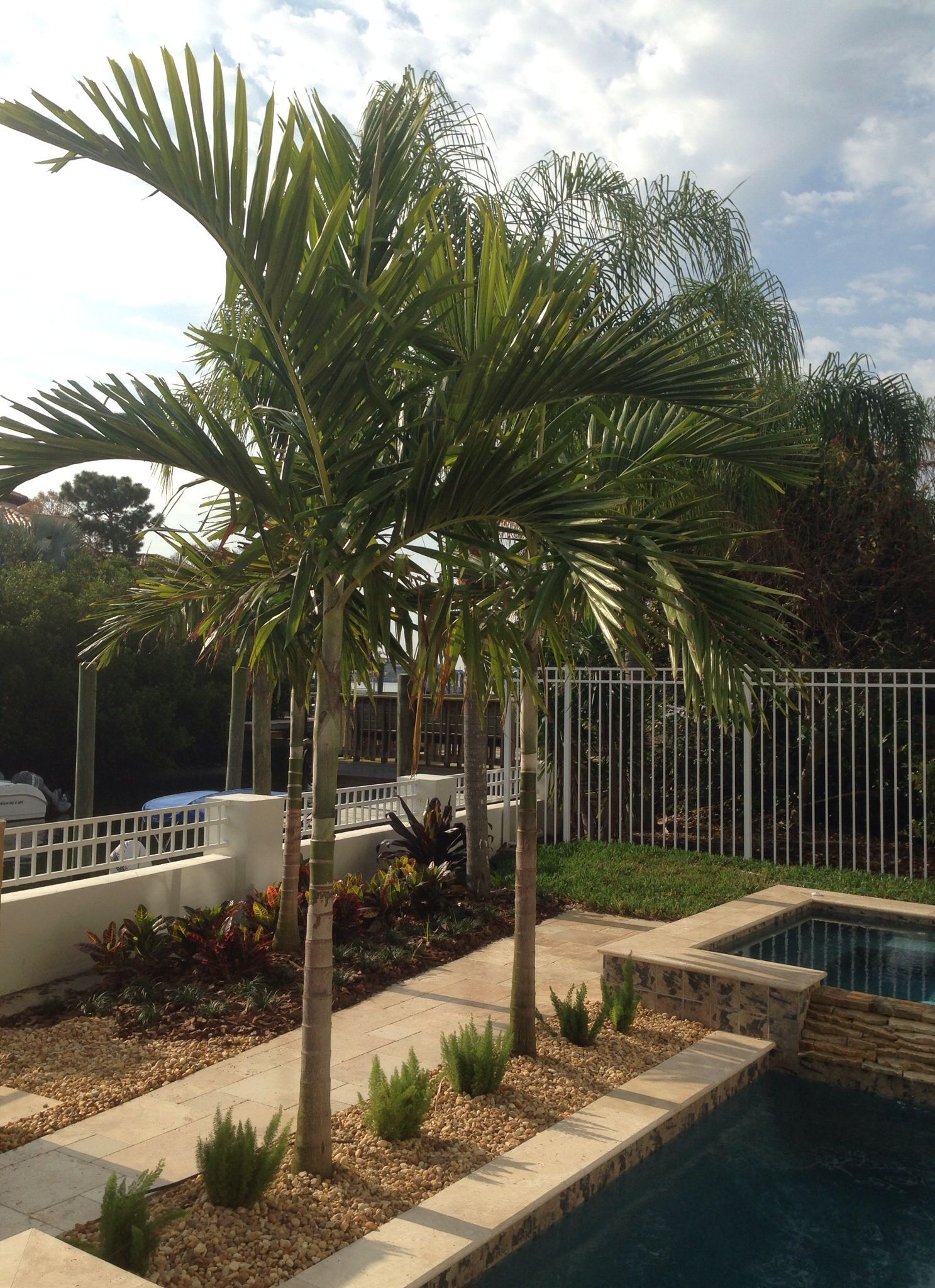 Alexander Palms Are A Slender And Elegant Palm That Fit Perfectly At Poolside They Are An Aus Palm Trees Landscaping Coastal Landscaping Tropical Landscaping