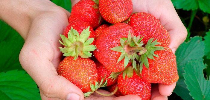 Beneficios de las fresas para estar guapa y sana, ¡descúbrelos!