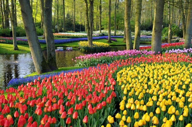 tulipe hollande parc