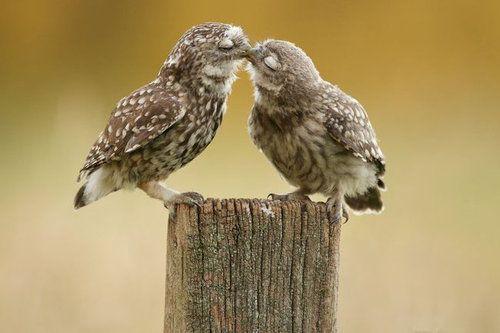 動物たちのキス01