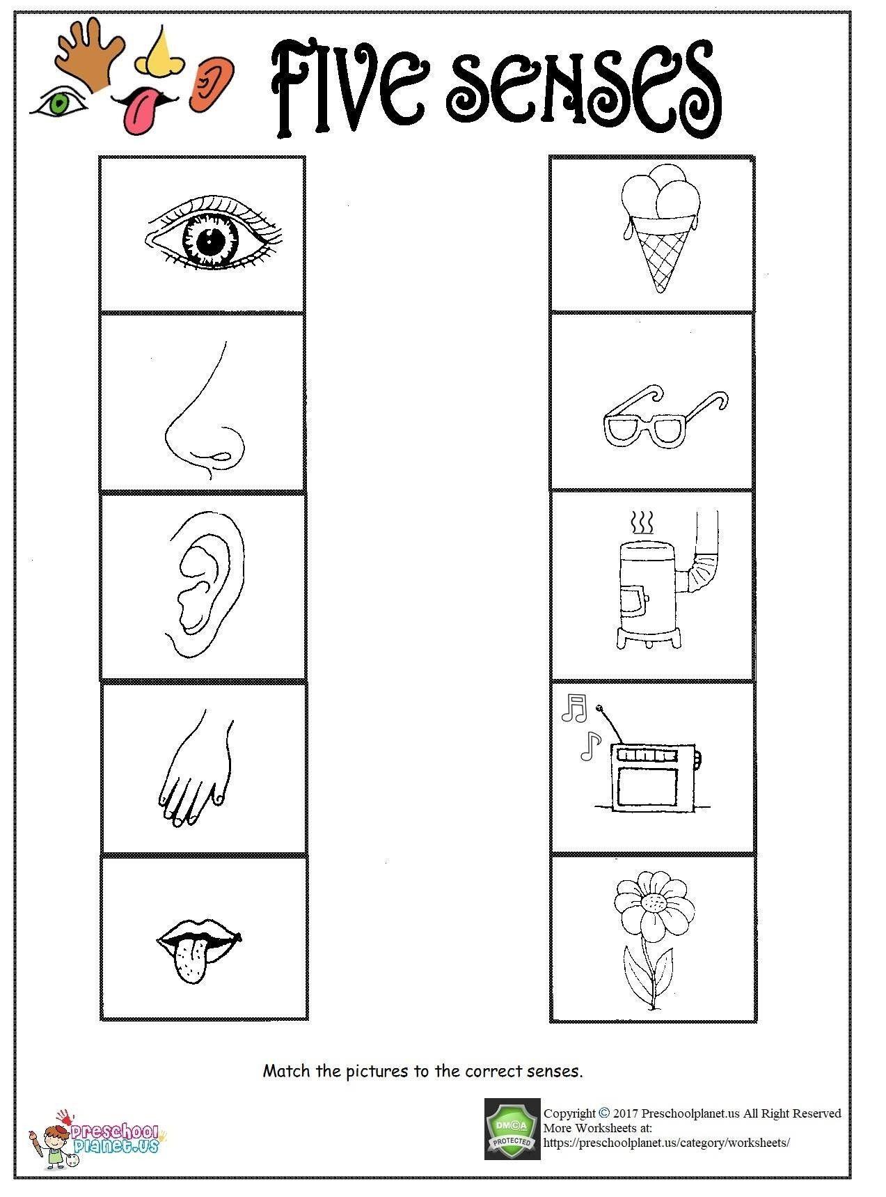 Five Senses Worksheets For Kindergarten Sounds