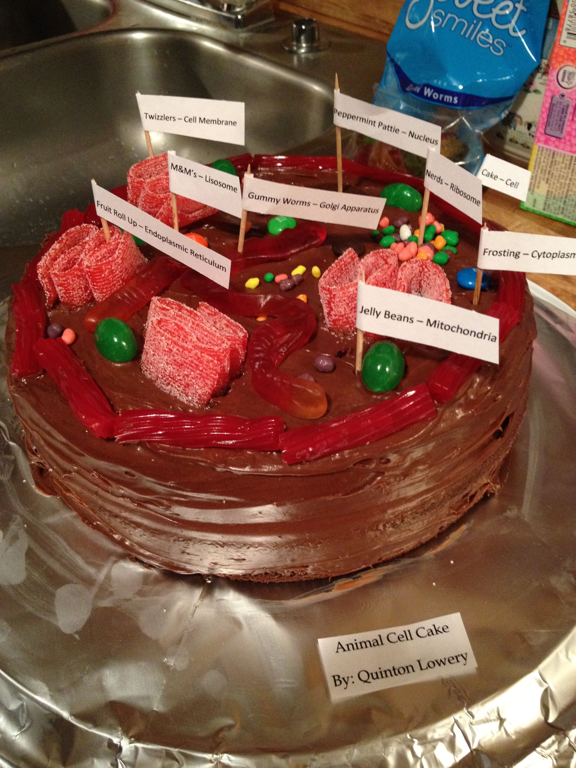Quinton S Animal Cell Cake 5th Grd Science Project