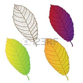hojas de otoño: Colección de otoño coloridas hojas aisladas