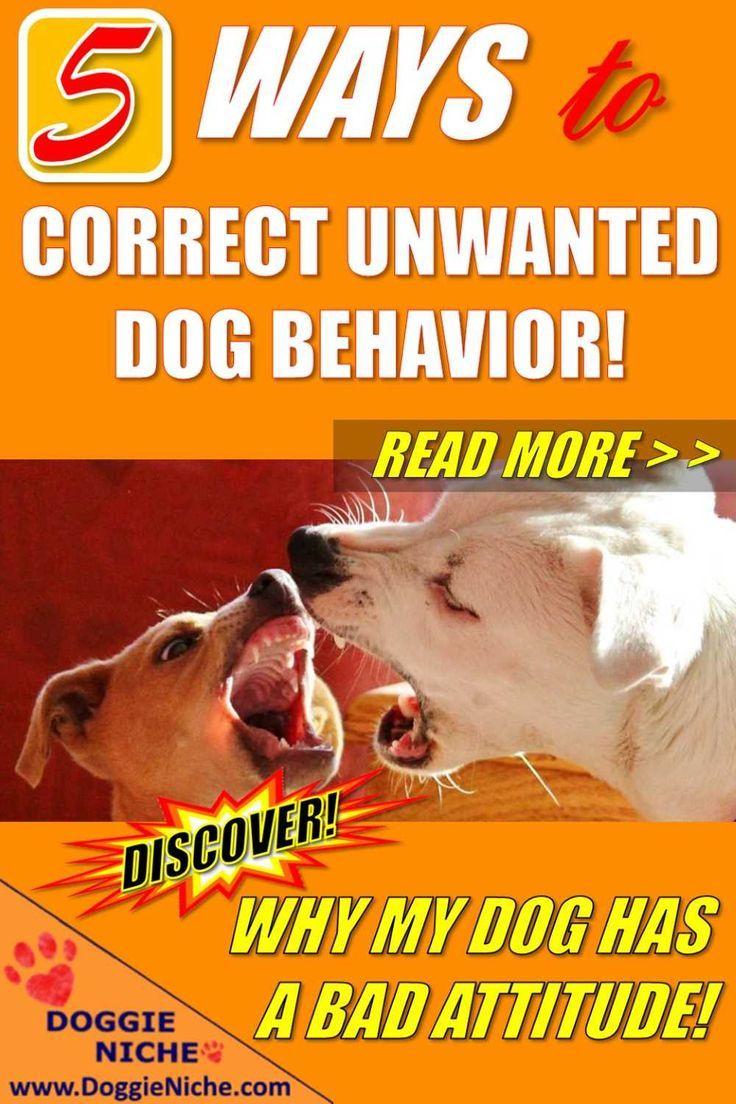 5 ways to correct unwanted dog behavior dog behavior