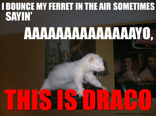 Funny Harry Potter Memes Draco : Harry potter memes page dark lord potter forums important
