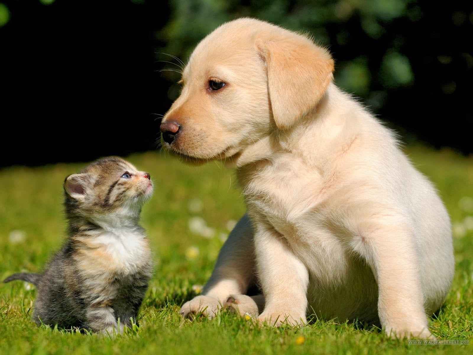 Un animale da compagnia è una cura miracolosa per il corpo e per la