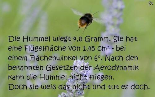 image result for zitat hummel kann nicht fliegen anything pinterest hummel fliegen und