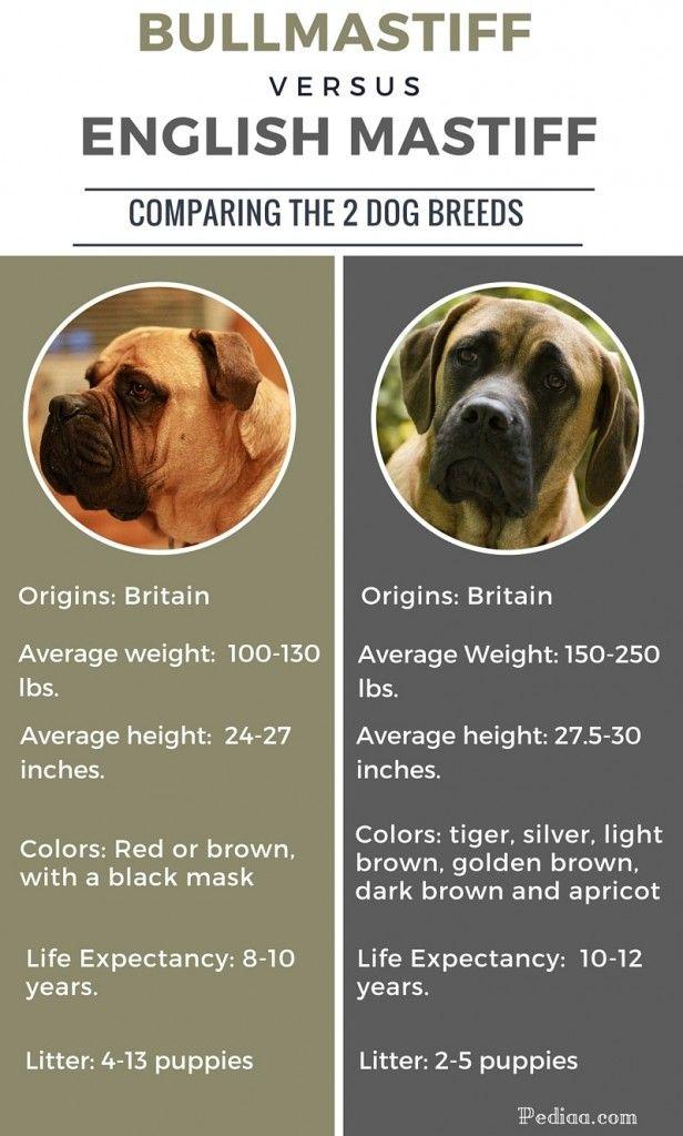 Difference Between Bullmastiff And English Mastiff Met
