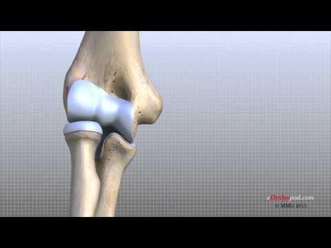 Elbow Anatomy Animated Tutorial - YouTube   Elbow anatomy ...