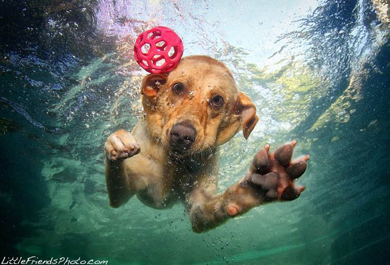 Dogs Catching Ball Under Water By Seth Casteel Underwater Dogs