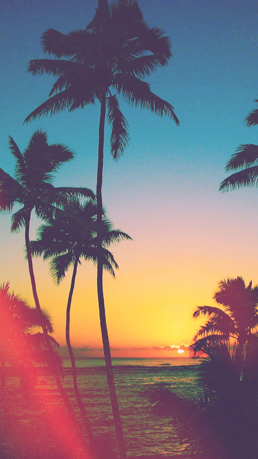 Tropicool iPhone 5/6 Wallpapers Graphic and Web Design
