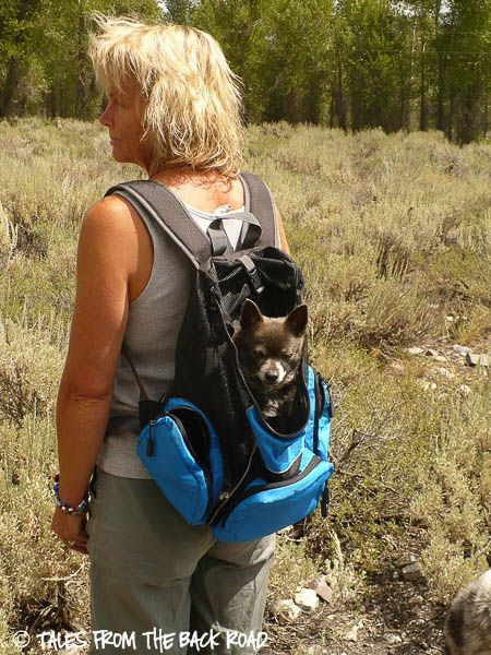 Dog Hiking Backpack Carrier Cg Backpacks