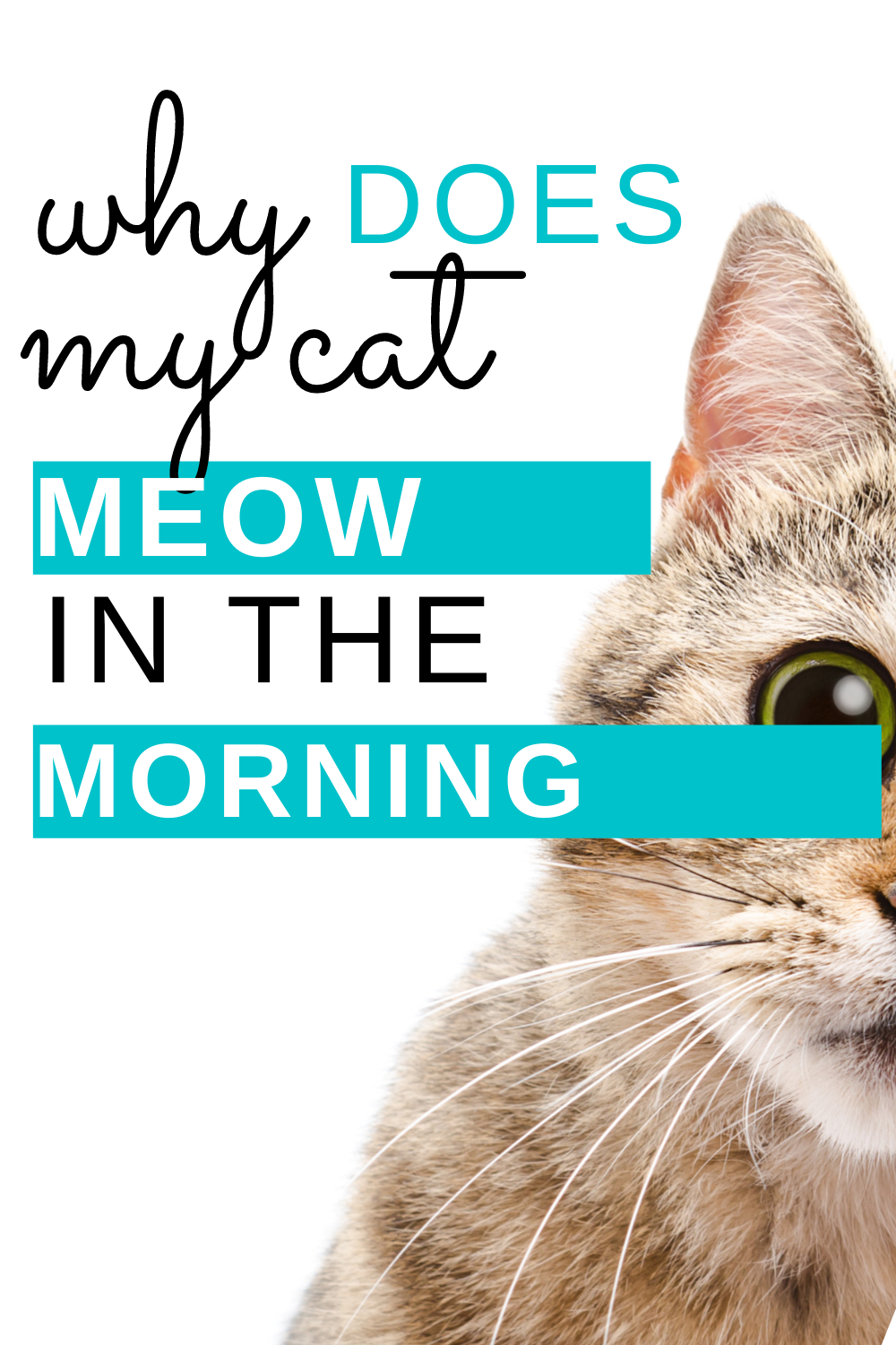 Why Does My Cat Meow In the Morning? Live Long and