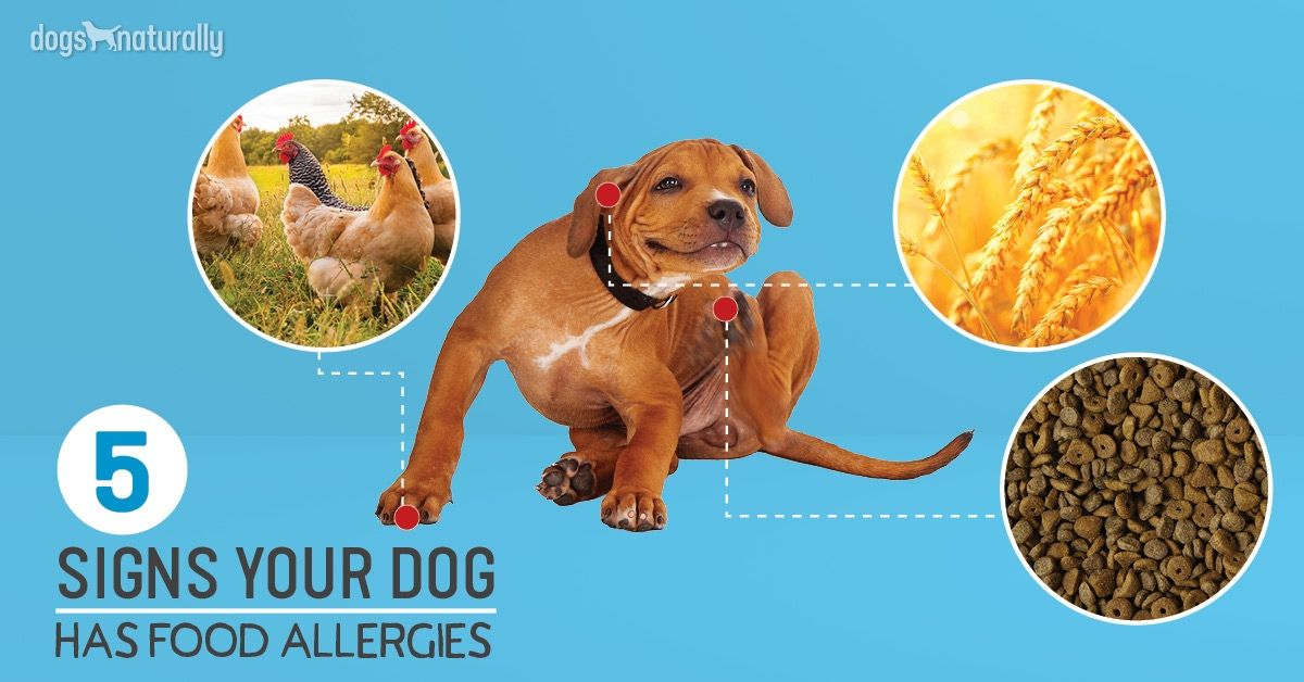 5 Signs Your Dog Has Food Allergies Your Dog Signs Of Food