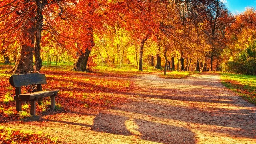 Autumn Leaves Park Hd Free Download Wallpapers Hd Images