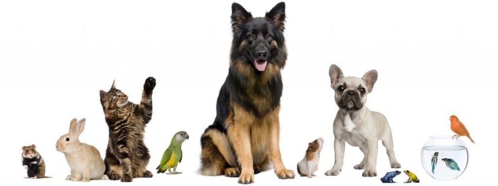 Http Vets Near Me Com Pets Animals Animals Images