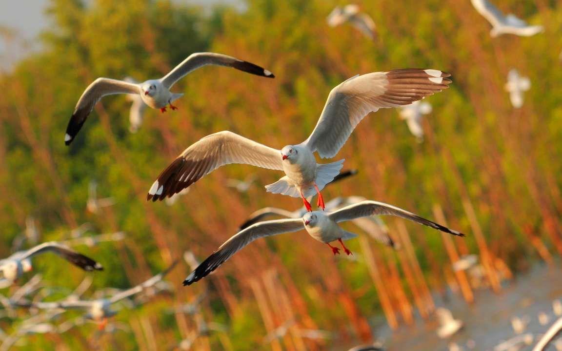 Download Wallpaper 3840x2400 Seagulls Birds Flying Sea 4k Ultra Hd 16 10 Hd Background Wallpaper Nature Wallpaper Best Iphone Wallpapers