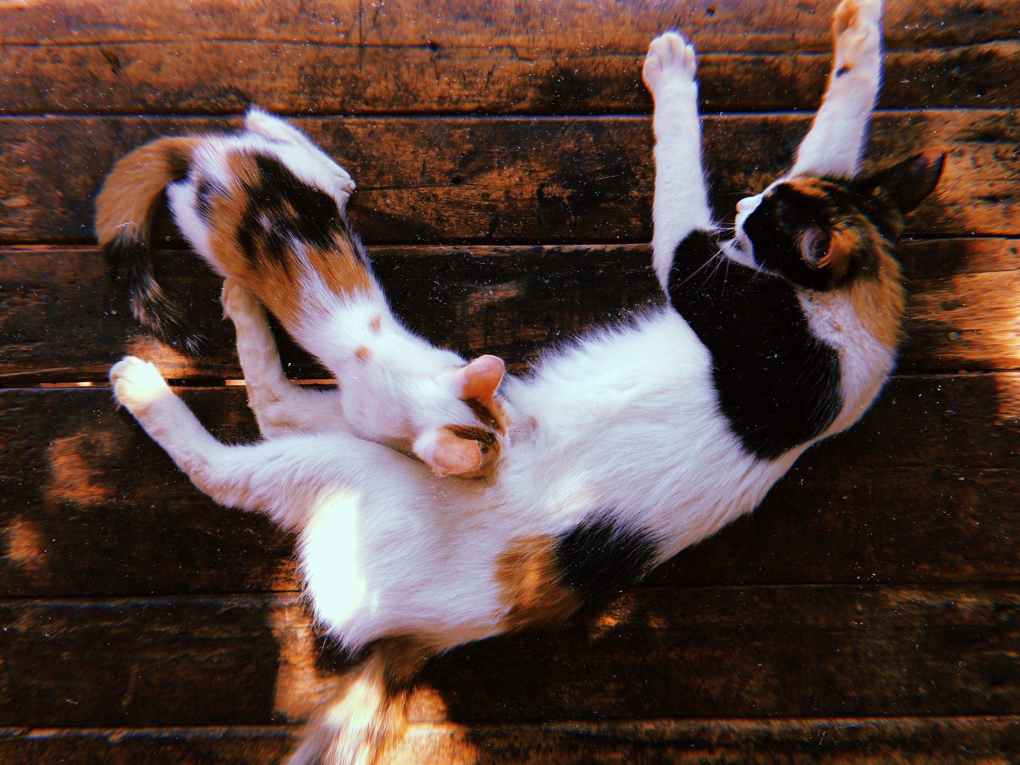 #cats #catlovers #momandbaby