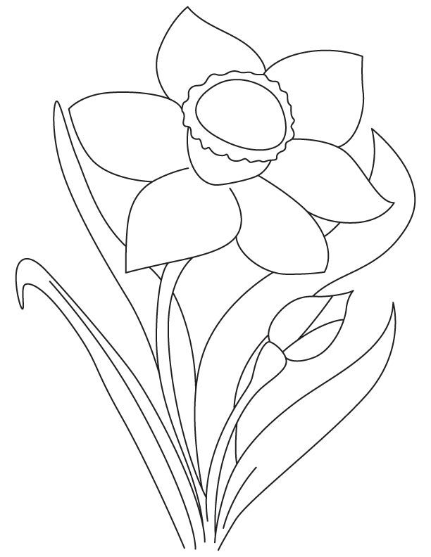 Yellow Daffodil Coloring Page Coloring Pages Daffodils Yellow Daffodils